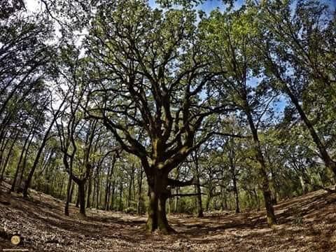 شجرة بوهاشم