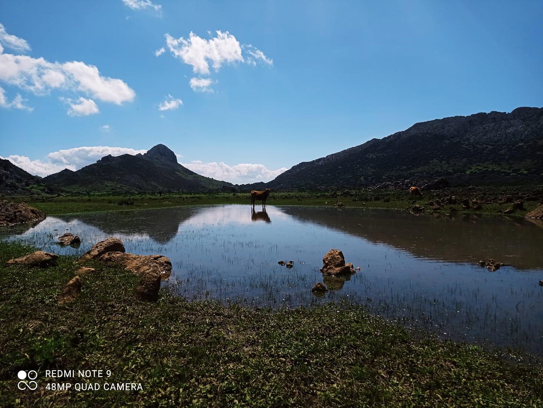 صورة من فحص لمهار تطوان