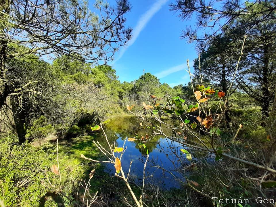 غابة الرّنضة وادراس تطوان