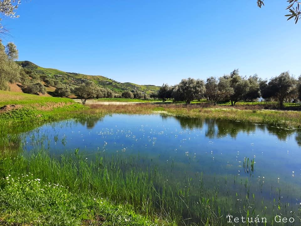 صورة لبحيرات جماعة المنصورة قبيلة بني أحمد