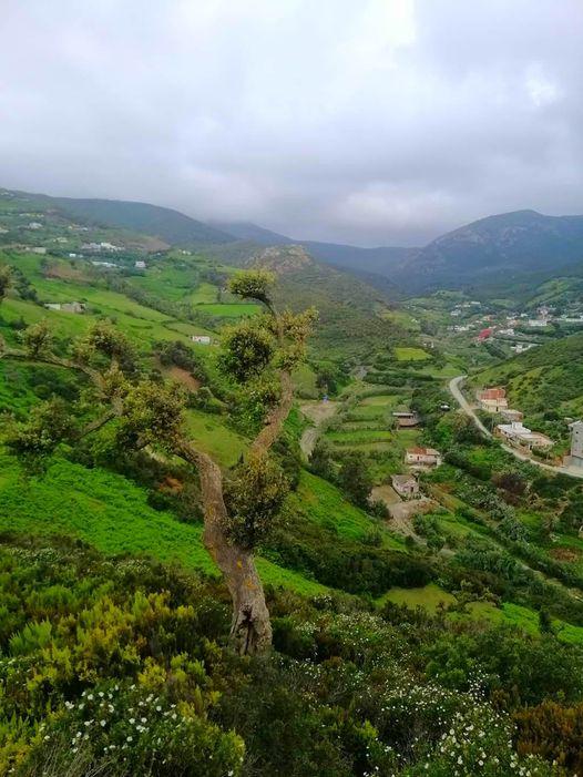 قرية بني مزالة